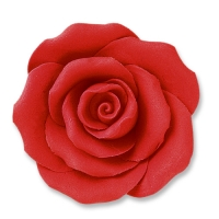 Large roses, red